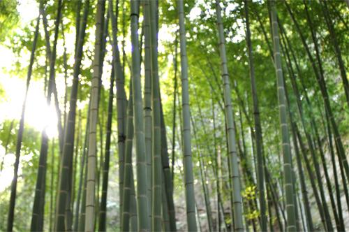 春の鎌倉散歩。_d0174704_22115279.jpg