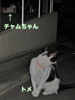 c0211810_053084.jpg