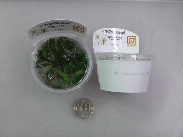 150305 熱帯魚・金魚・侘び草・水草・観葉植物_f0189122_1334719.jpg