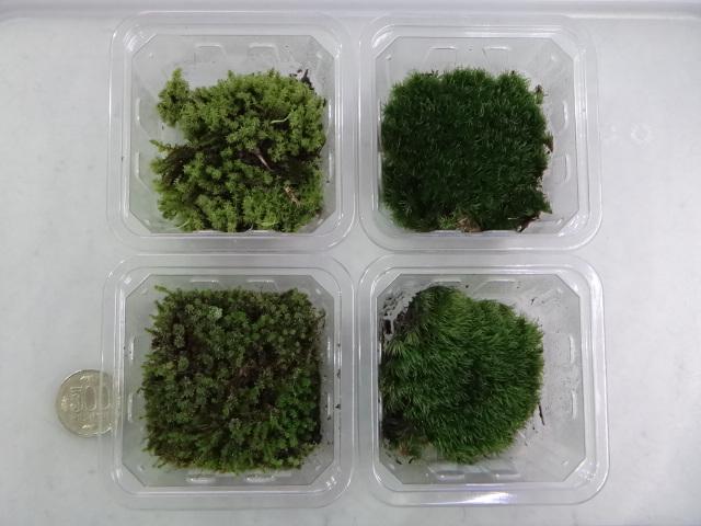 150305 熱帯魚・金魚・侘び草・水草・観葉植物_f0189122_133928100.jpg