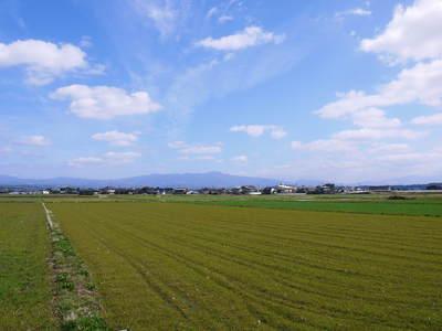 砂田米 れんげの成長!今年も緑肥として育て、田んぼでは米しか作らんばい!!_a0254656_1651121.jpg