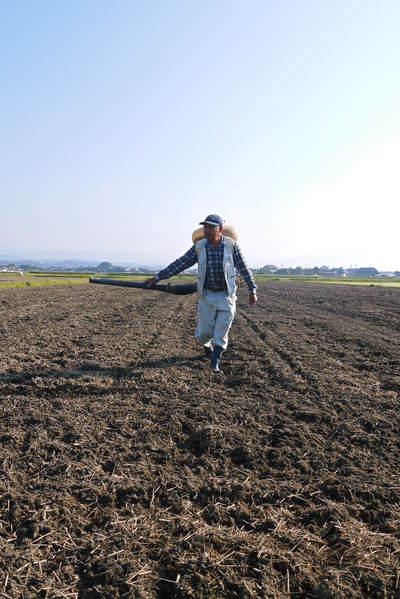 砂田米 れんげの成長!今年も緑肥として育て、田んぼでは米しか作らんばい!!_a0254656_1750468.jpg