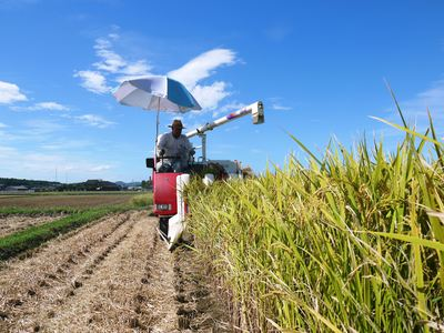 砂田米 れんげの成長!今年も緑肥として育て、田んぼでは米しか作らんばい!!_a0254656_18185938.jpg