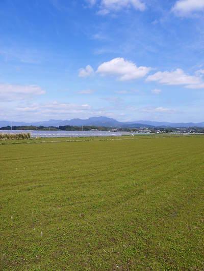 砂田米 れんげの成長!今年も緑肥として育て、田んぼでは米しか作らんばい!!_a0254656_18263551.jpg
