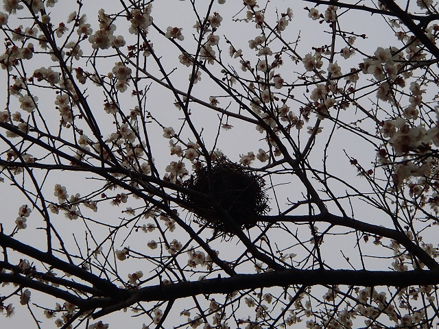 巣 と  愛情_d0105967_11095492.jpg