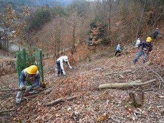 伐採後の後始末も大事な作業なのです_b0102572_16471680.jpg