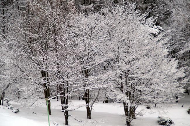 3月の雪_d0162994_9325146.jpg