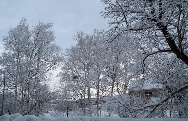 3月の雪_d0162994_9331517.jpg