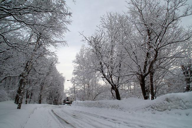 3月の雪_d0162994_9341329.jpg