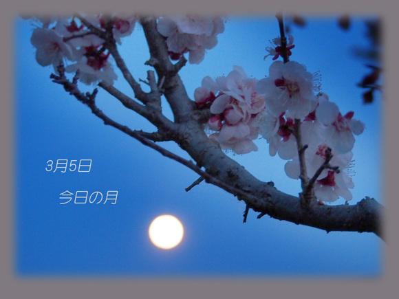 b0012595_2010771.jpg