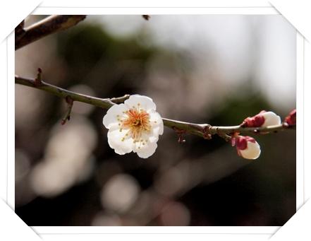 バラ園の梅_c0026824_17321992.jpg