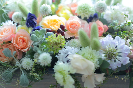 お祝いの花、アシスタントシルキーちゃんあらためレインちゃんへ、_a0042928_2246642.jpg