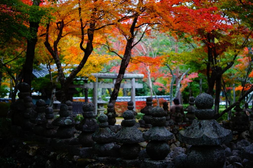帰国日記@ベルリン 37 紅葉の京都!_c0180686_17483281.jpg
