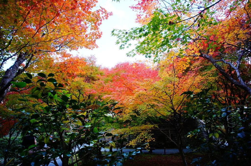 帰国日記@ベルリン 37 紅葉の京都!_c0180686_17503842.jpg