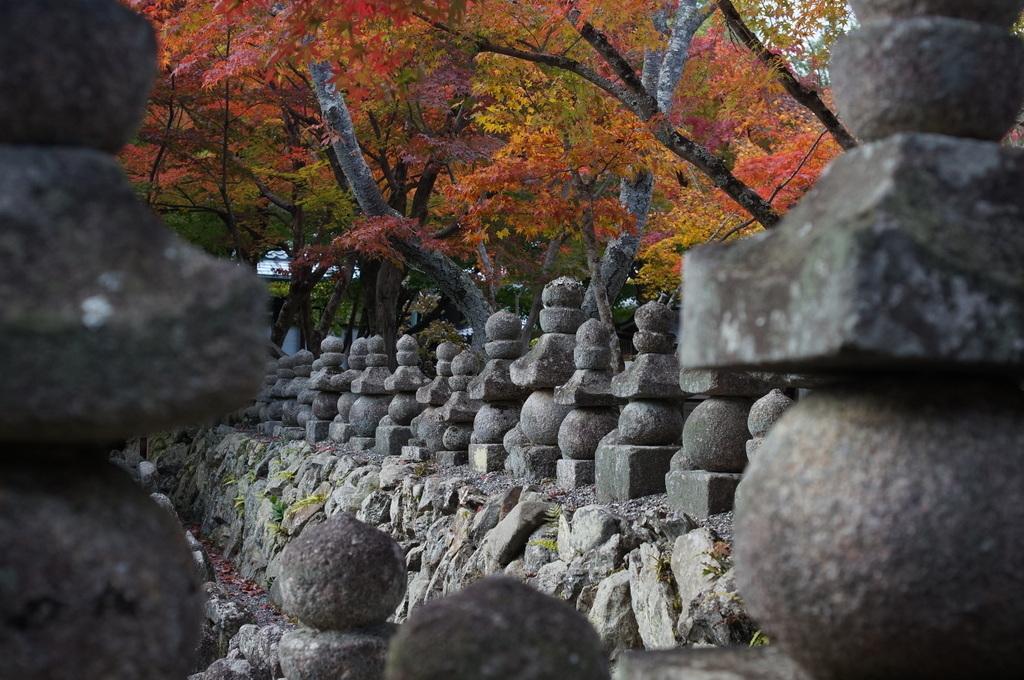 帰国日記@ベルリン 37 紅葉の京都!_c0180686_17505255.jpg