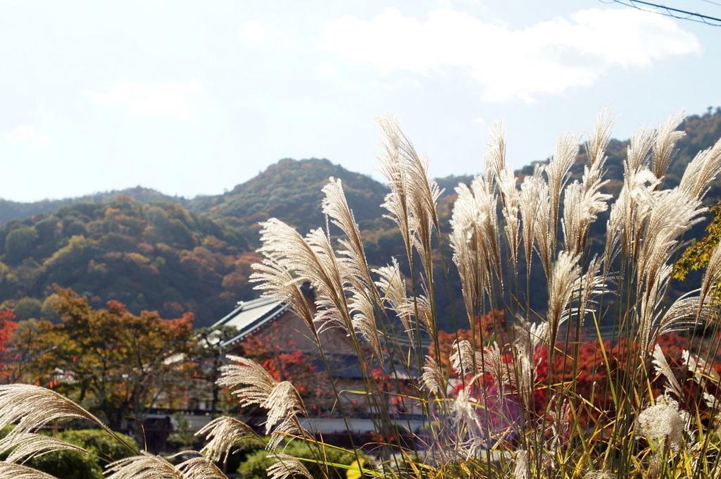 帰国日記@ベルリン 37 紅葉の京都!_c0180686_17564774.jpg