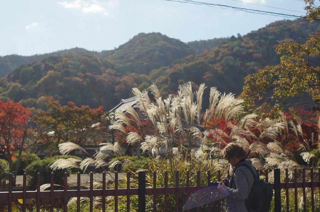 帰国日記@ベルリン 37 紅葉の京都!_c0180686_17570408.jpg