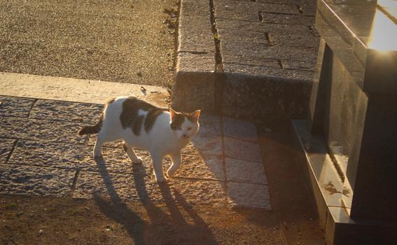 宇佐神宮の猫_a0329820_21400267.jpg