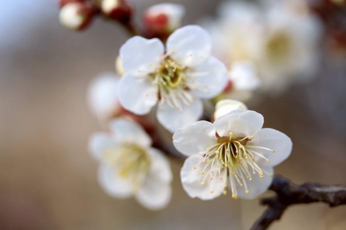 早春 梅の花 色々_d0150720_11135575.jpg