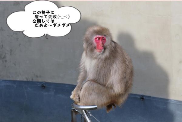 おすすめ動物園体験記&週末のお出かけ記事に注目!_f0357923_1552627.jpg