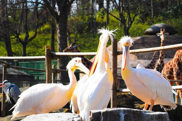 おすすめ動物園体験記&週末のお出かけ記事に注目!_f0357923_1562936.jpg
