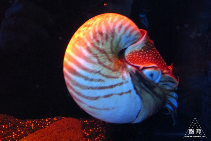 444 沼津港深海水族館 ~日本一の深海水族館~_c0211532_2335842.jpg