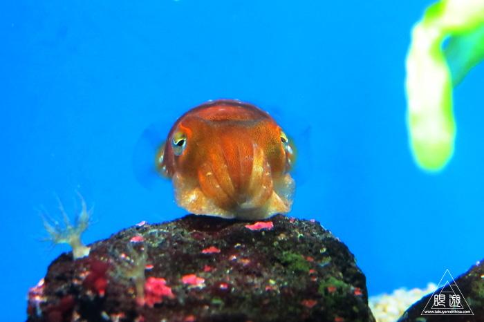 444 沼津港深海水族館 ~日本一の深海水族館~_c0211532_23362759.jpg