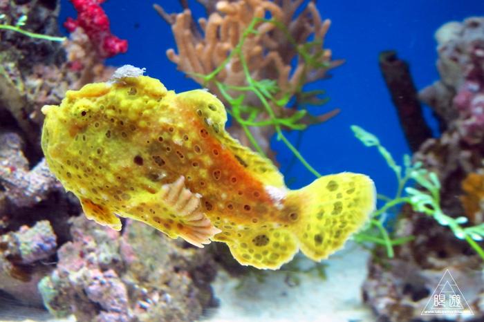 444 沼津港深海水族館 ~日本一の深海水族館~_c0211532_23374372.jpg