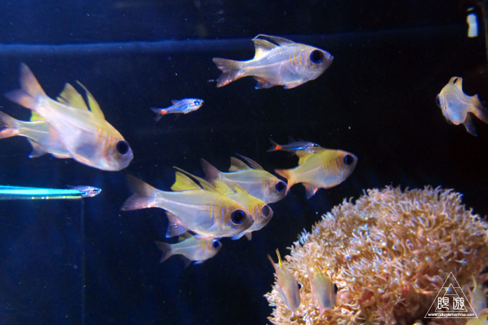 444 沼津港深海水族館 ~日本一の深海水族館~_c0211532_23413674.jpg