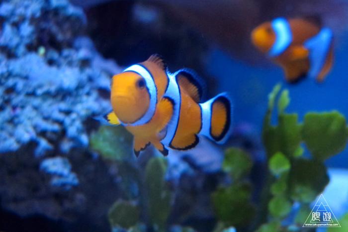 444 沼津港深海水族館 ~日本一の深海水族館~_c0211532_23491961.jpg