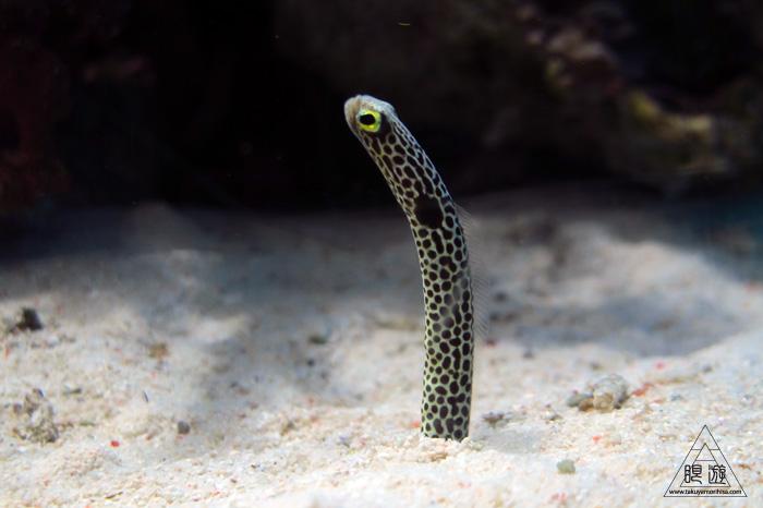 444 沼津港深海水族館 ~日本一の深海水族館~_c0211532_23544117.jpg