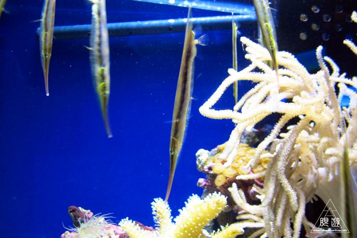 444 沼津港深海水族館 ~日本一の深海水族館~_c0211532_23575593.jpg