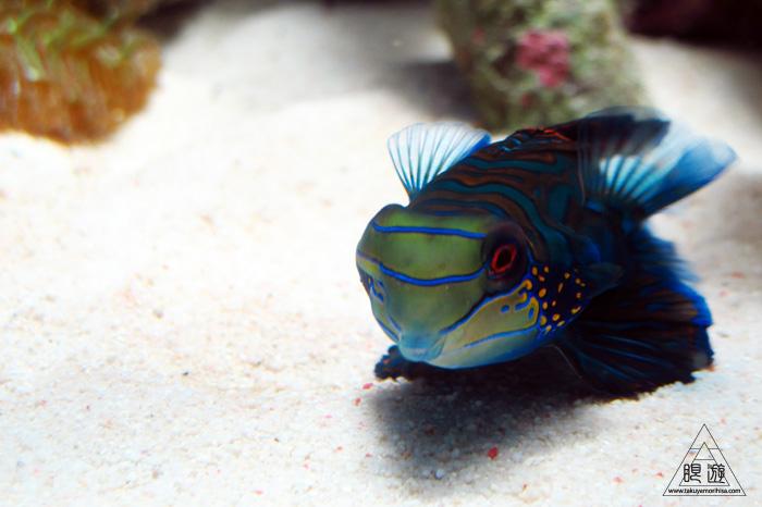 444 沼津港深海水族館 ~日本一の深海水族館~_c0211532_2357992.jpg