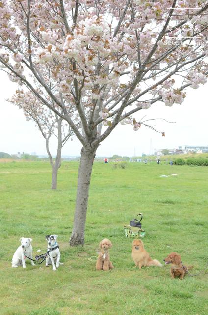春のお散歩グループクラスのお知らせ_c0099133_10103216.jpg
