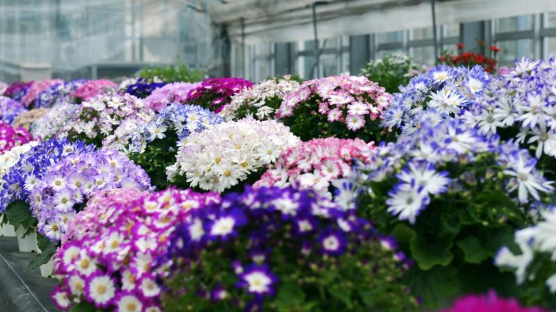 温室で咲く花 ②_d0246136_17371489.jpg
