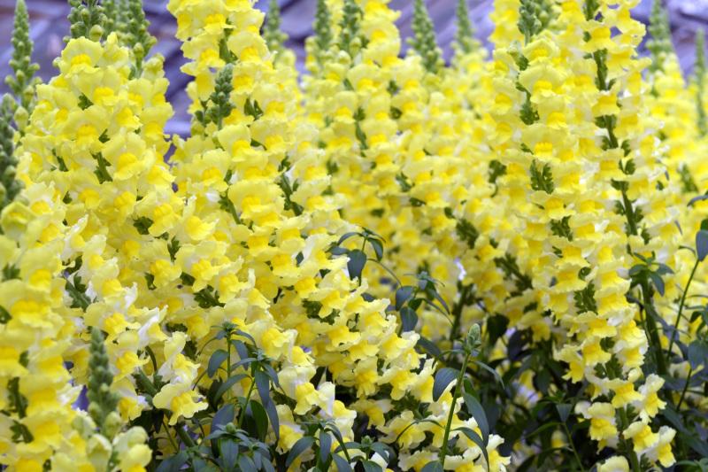 温室で咲く花 ②_d0246136_17372621.jpg