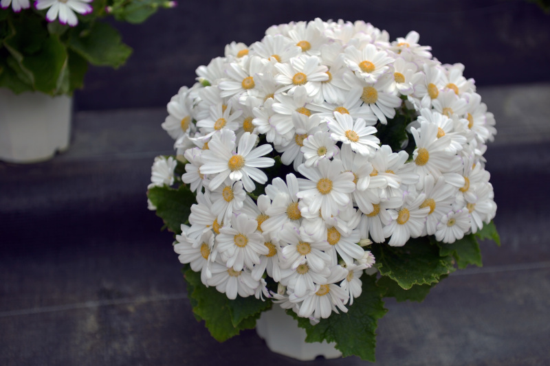 温室で咲く花 ②_d0246136_17373969.jpg