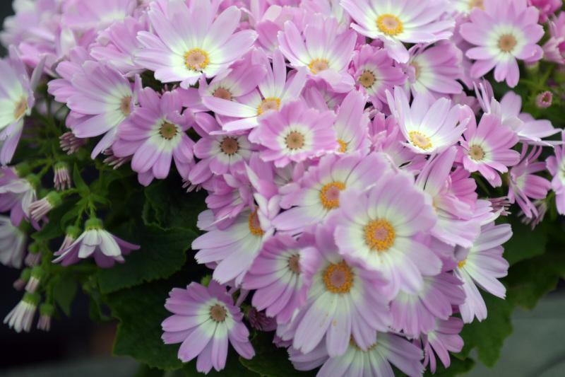 温室で咲く花 ②_d0246136_17375457.jpg
