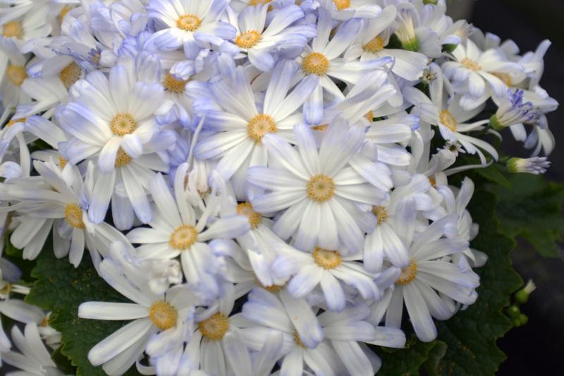 温室で咲く花 ②_d0246136_17381407.jpg