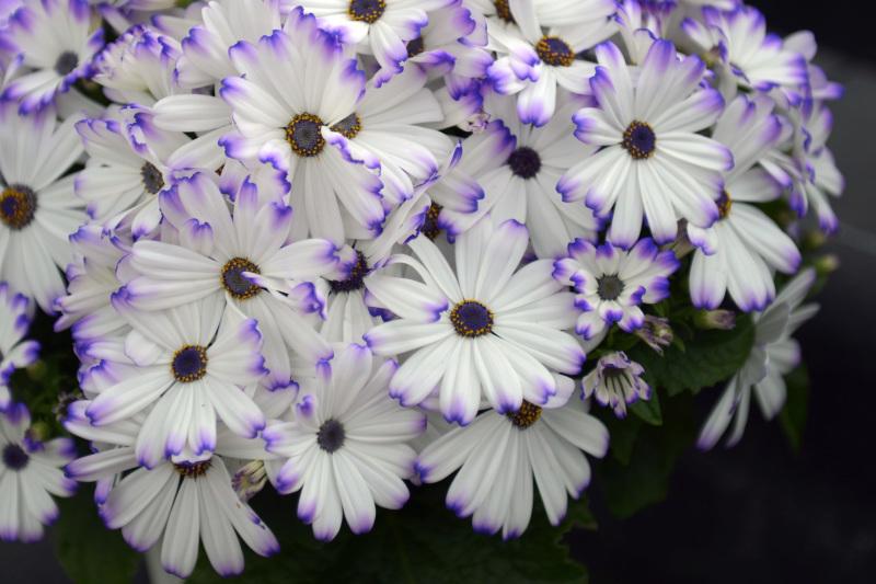温室で咲く花 ②_d0246136_17383576.jpg