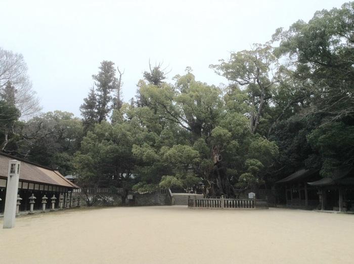 満月の日の大山祇神社参拝◎_f0183846_20143026.jpg