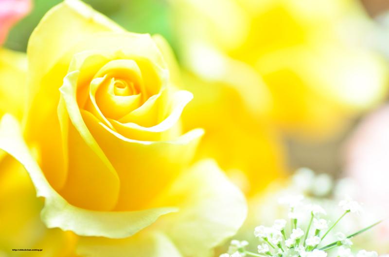 卒業と花束**_e0221779_16123512.jpg
