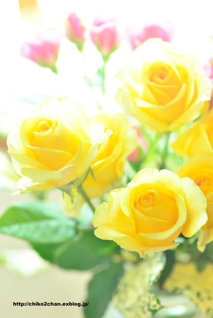 卒業と花束**_e0221779_16124753.jpg