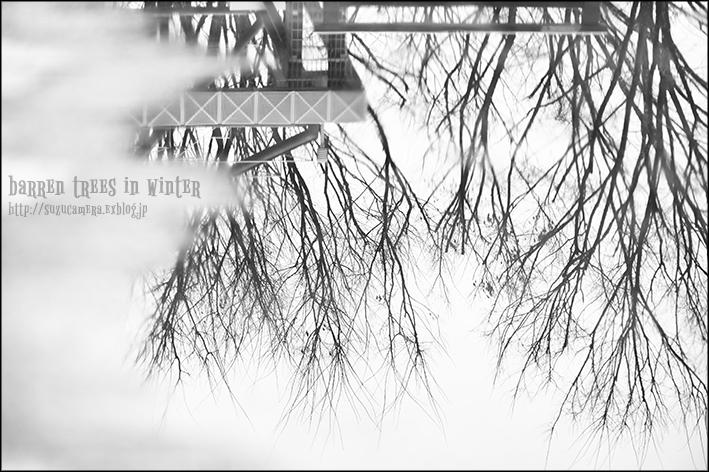 冬木立_f0100215_23153550.jpg
