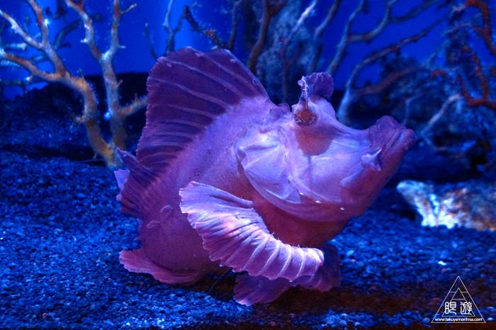 444 沼津港深海水族館 ~日本一の深海水族館~_c0211532_01462.jpg