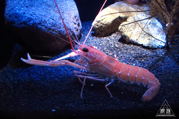 444 沼津港深海水族館 ~日本一の深海水族館~_c0211532_016036.jpg