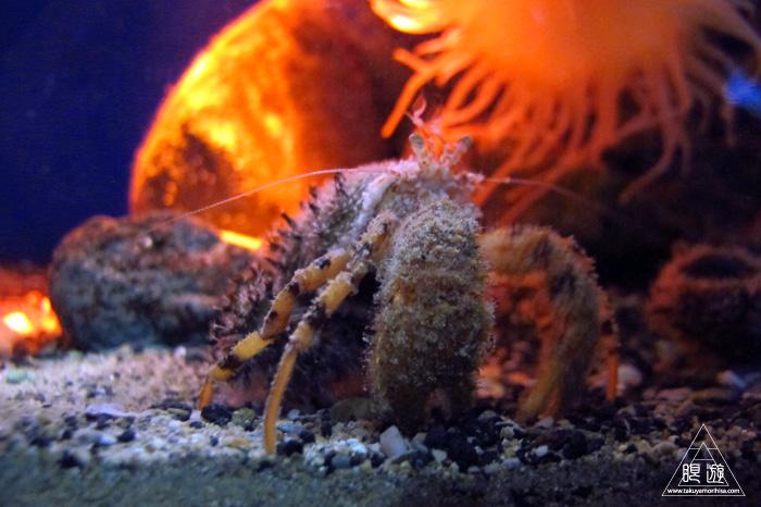 444 沼津港深海水族館 ~日本一の深海水族館~_c0211532_0165734.jpg