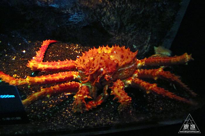 444 沼津港深海水族館 ~日本一の深海水族館~_c0211532_0173350.jpg