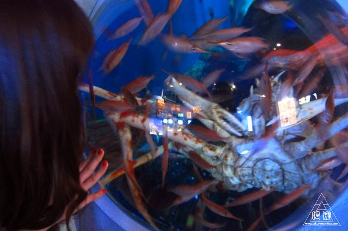 444 沼津港深海水族館 ~日本一の深海水族館~_c0211532_0191334.jpg