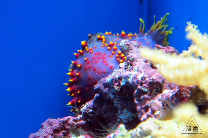 444 沼津港深海水族館 ~日本一の深海水族館~_c0211532_0355980.jpg